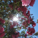 Djerba, 02.06.2012, 10.58 h Aldiana Djerba Atlantide