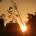 Djerba, 05.06.2012, 19.06 h