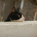 Djerba, 8. Juni 2012, 18.38 h @ meiner Terrasse