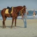 Djerba, 09.06.2012, 18.06 h SENTIDO Djerba Beach