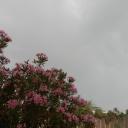 Djerba, 09.06.2012, 07.36 h (auf meiner Terrasse)