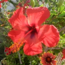 Djerba, 07.06.2012, 07.52 h @ my garden --)