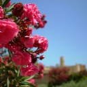 Ribat - Monastir