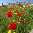 Springtime in the Roman city of Dougga
