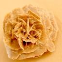 Sand Flower ✿ Rose de sable ✿ زهره الرمال بنت الصحراء  © Nada Shu