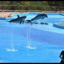 Dolphins ♥   Friguia Park - Samir Cherif Photography