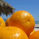 Fruit of Tunisia 2d