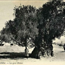 Djerba 4