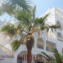 Hotel Delphin El Habib_a46